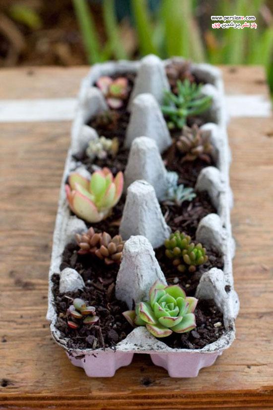 دکوراسیون با گیاهان کاکتوس