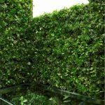 حمام شیک و سرسبز در میان گیاهان + تصاویر دیدنی