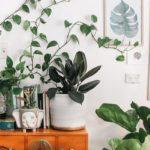 گیاهان جاذب آلودگی هوا و موثر در ارتقاء کیفیت هوا را بشناسید