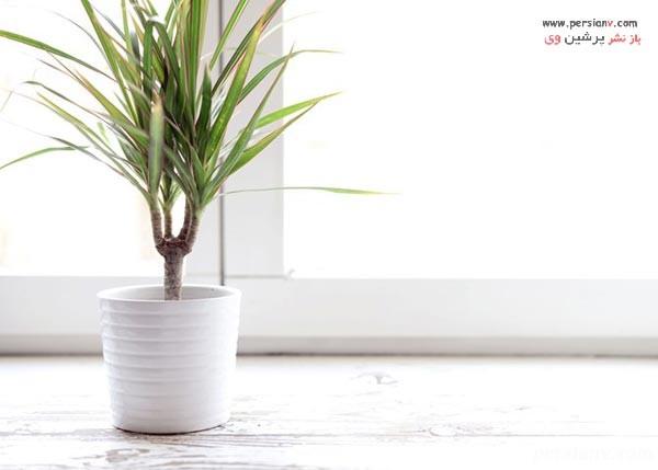 گیاهان جاذب آلودگی هوا
