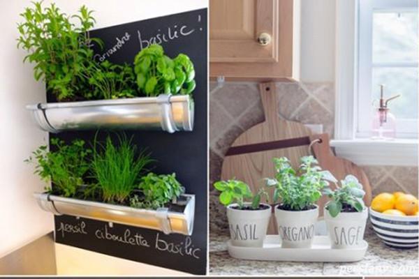 باغچه خانگی سبزیجات در آشپزخانه با ایده های دوست داشتنی