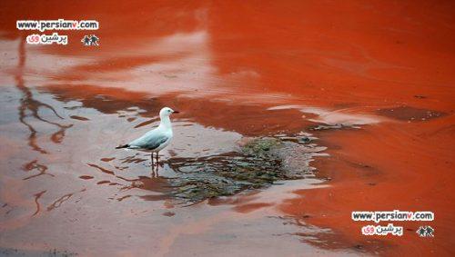 تصاویر دیدنی از دریاچه خون در استرالیا + عکس