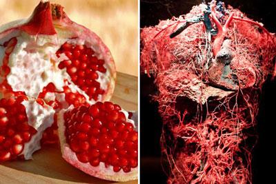 شباهت فوق العاده جالب برخی مواد غذایی به اندام های بدن