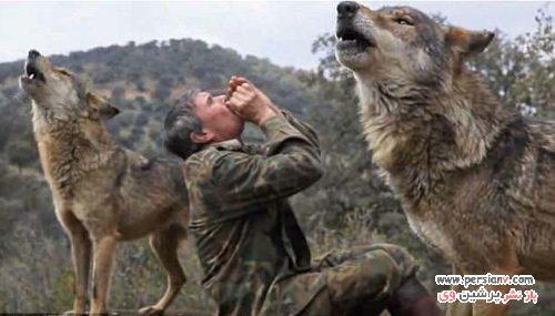 زندگی مردی با گرگ ها