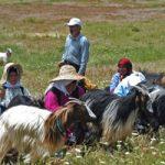 دامغان | جشنواره شیردوشان یا امامدر