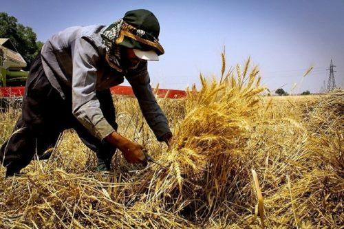 روز خودکفایی گندم در ایران