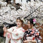 ژاپن   جشن شکوفه های گیلاس در این کشور