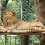 باغ وحش در ایران ، اولین بار توسط چه کسی و درکجا ساخته شد؟