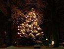 سنت درخت کریسمس