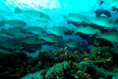 روز جهانی اقیانوس ها در ۸ ژوئن
