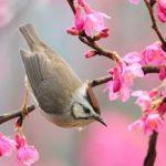 اشعار بهار از سعدی و رودکی دو شاعر بزرگ و نامی