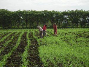 روز جهاد کشاورزی