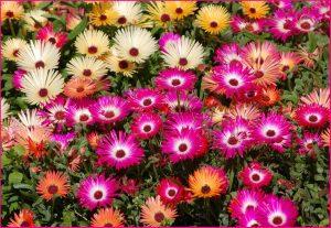 روز ملی گل و گیاه