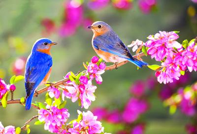 شعر بهار آمد و رفت ماه سپند از ملک الشعرای بهار