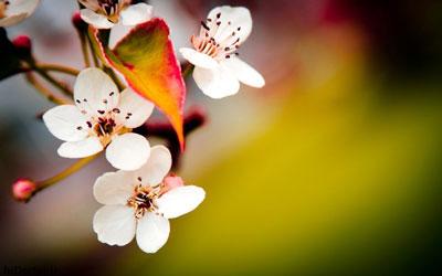 شعر کدام باغ که یکروز شورهزاری نیست از پروین اعتصامی