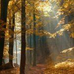 شعر خراب از باد پائيز خمارانگيز تهرانم از استاد شهریار