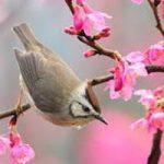 خوشا بهارا شعری زیبا از ملکالشعرای بهار