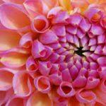 شعر رنگ از گل رخسار تو گیرد گل خود روی از باباافضل کاشانی