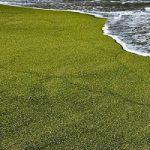 ساحل سبز رنگ در هاوایی (+ عکس)
