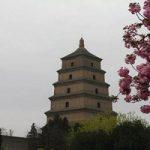 معبد بزرگ غاز وحشی در چین+تصاویر