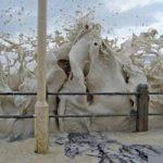 ساحلی با امواج کاپوچینو +تصاویر