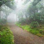۱۰ جنگل زیبای جهان را بشناسید