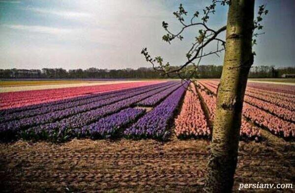آشنایی با هلند