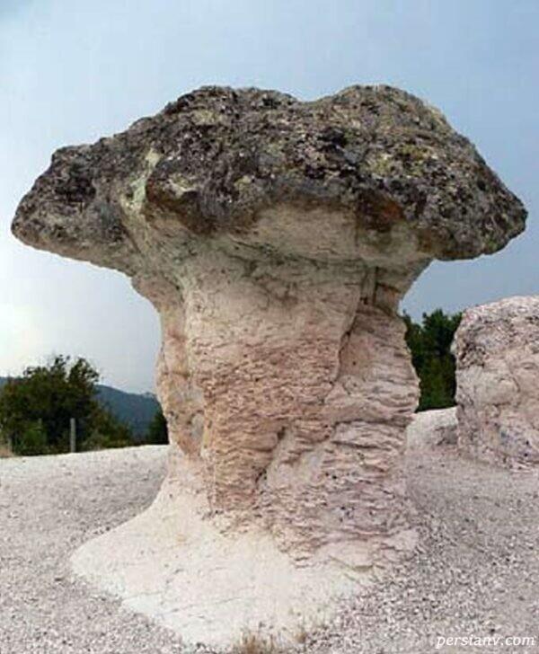 قارچ سنگی