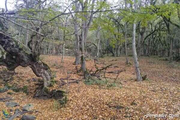 الیمستان، جنگلی زیبا در مازندران