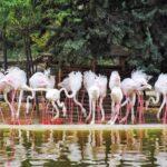 تهرانگردی آخر هفته در باغ پرندگان تهران