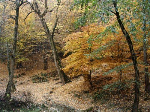 روستای زیارت