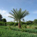 روستای لادیز زاهدان+تصاویر