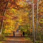 زیباترین پاییز جهان در آن آربو آمریکا !+تصاویر
