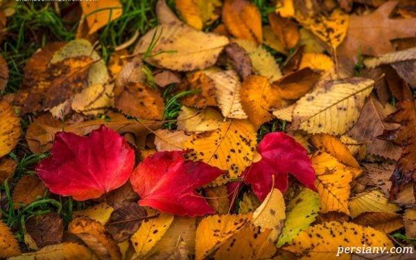 زیباترین پاییز جهان