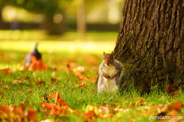 نکات عکاسی در پاییز