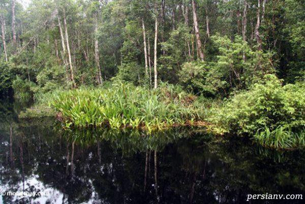 پارک ملی تانجانگ پوتینگ
