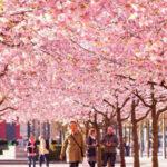 دیدنی ترین شهر های جهان در فصل بهار