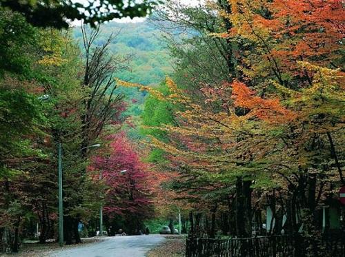 گشت و گذار در طبیعت بسیار زیبا و شگفت انگیز جنگل النگدره+تصاویر