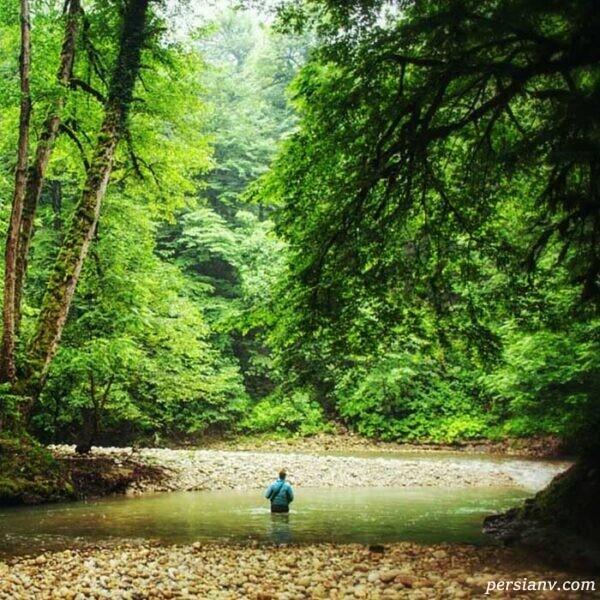 جنگل پلنگ دره