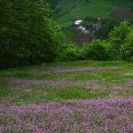 گیلده , روستایی با طبیعتی زیبا و جنگلهای بکر در شمال ایران