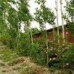 روستای خوش آب و هوا سیرچ زادگاه خالق قصه های مجید+تصاویر