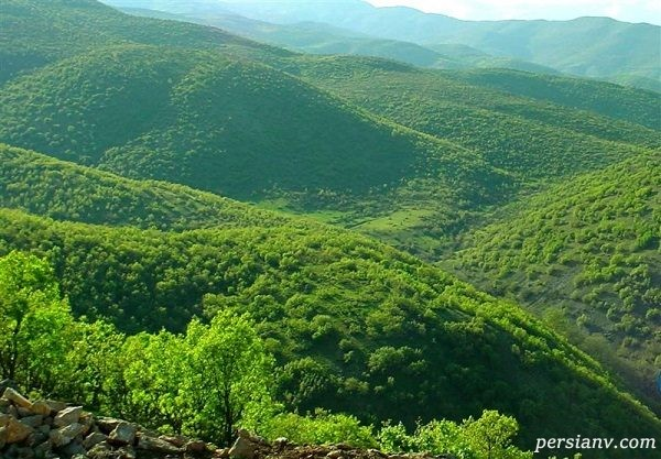 تفریح در جنگل های دیدنی روستای بکر میر آباد+تصاویر