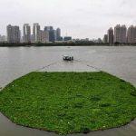 رودخانه ای دیدنی پوشیده از گیاه در چین+تصاویر