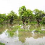 باغستان سنتی قزوین را بیشتر بشناسید