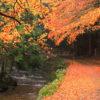 بسته بندی وسایل مناسب برای سفر در فصل پاییز+تصاویر