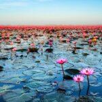 دریاچه نیلوفر قرمز کجاست؟ این دریاچه زیبا را بشناسید