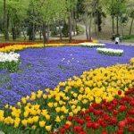 زیبایی های پارک ییلدیز استانبول را از دست ندهید+تصاویر