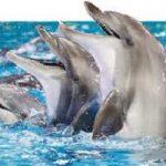 پارک آبی دلفین استانبول بزرگترین پارک دلفینها در اروپا+تصاویر
