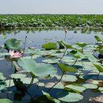 تالاب لنگور ، طبیعتی بکر و بسیار زیبا در بابلسر+تصاویر