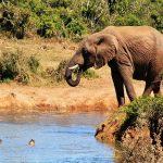 راهنمای سفر سیاحتی ارزان به آفریقا+تصاویر